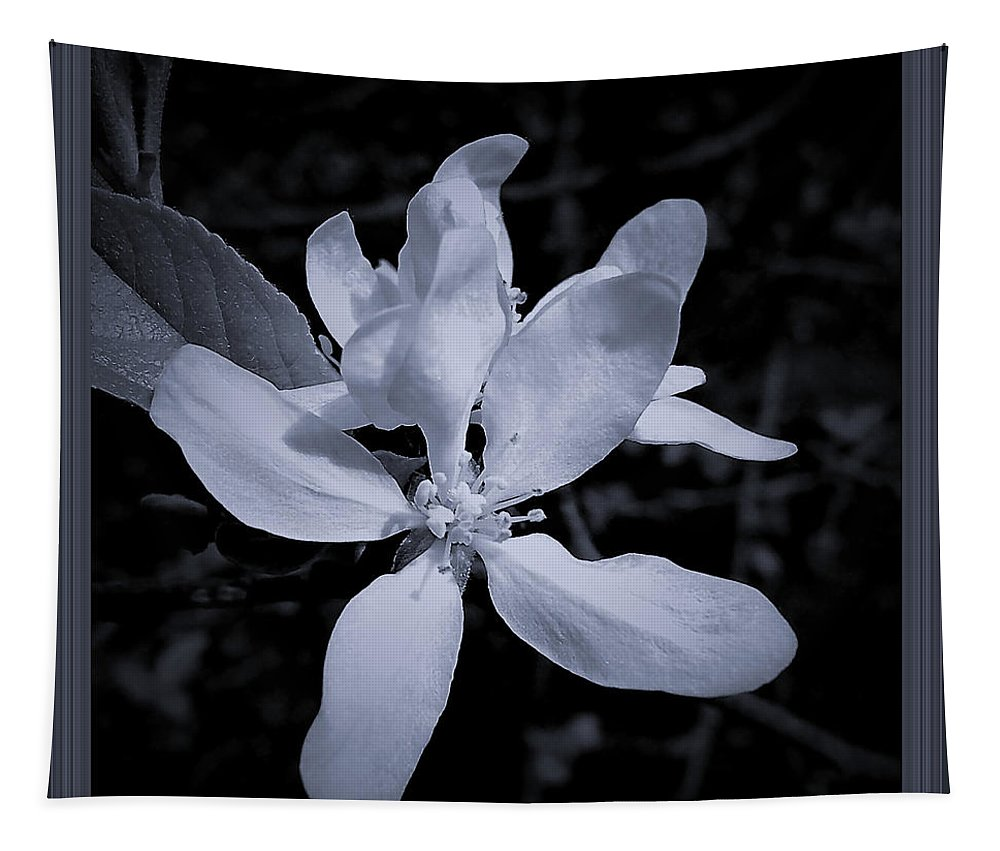 Nature Tapestry featuring the photograph Blossoms In Black And White by Debra Lynch