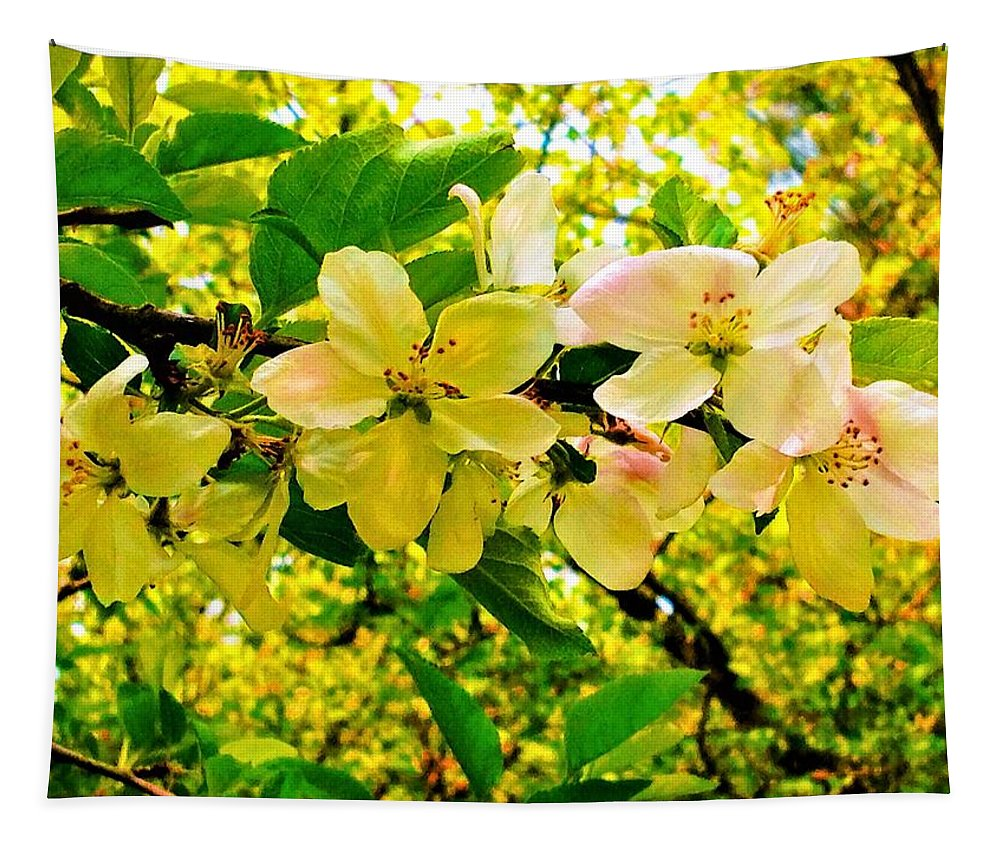 Apple Tapestry featuring the photograph Blossoms Of Sunshine by Debra Lynch