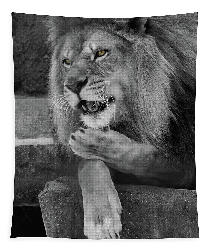 Lion Tapestry featuring the photograph Blow You A Kiss Black And White T O C by Judy Whitton