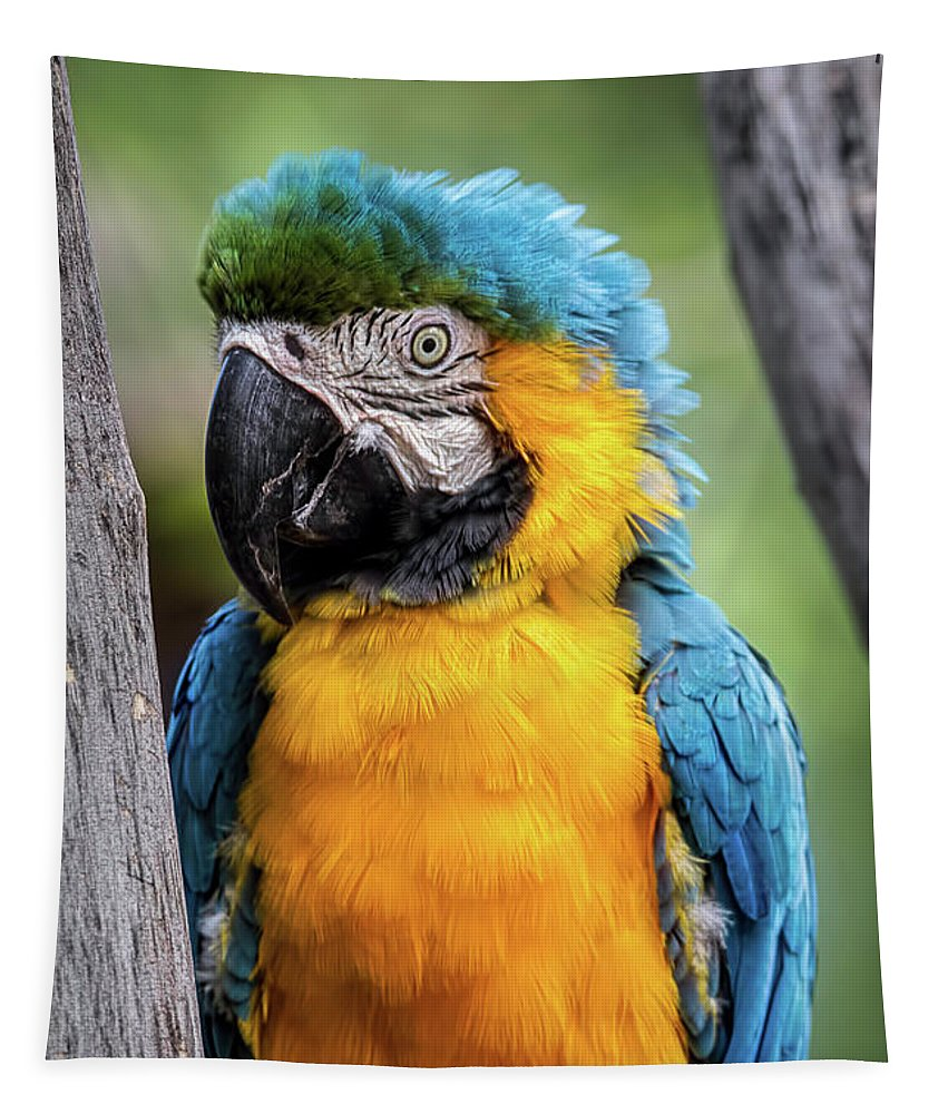 Animal Tapestry featuring the photograph Blue And Yellow Macaw Portrait by Teresa Wilson