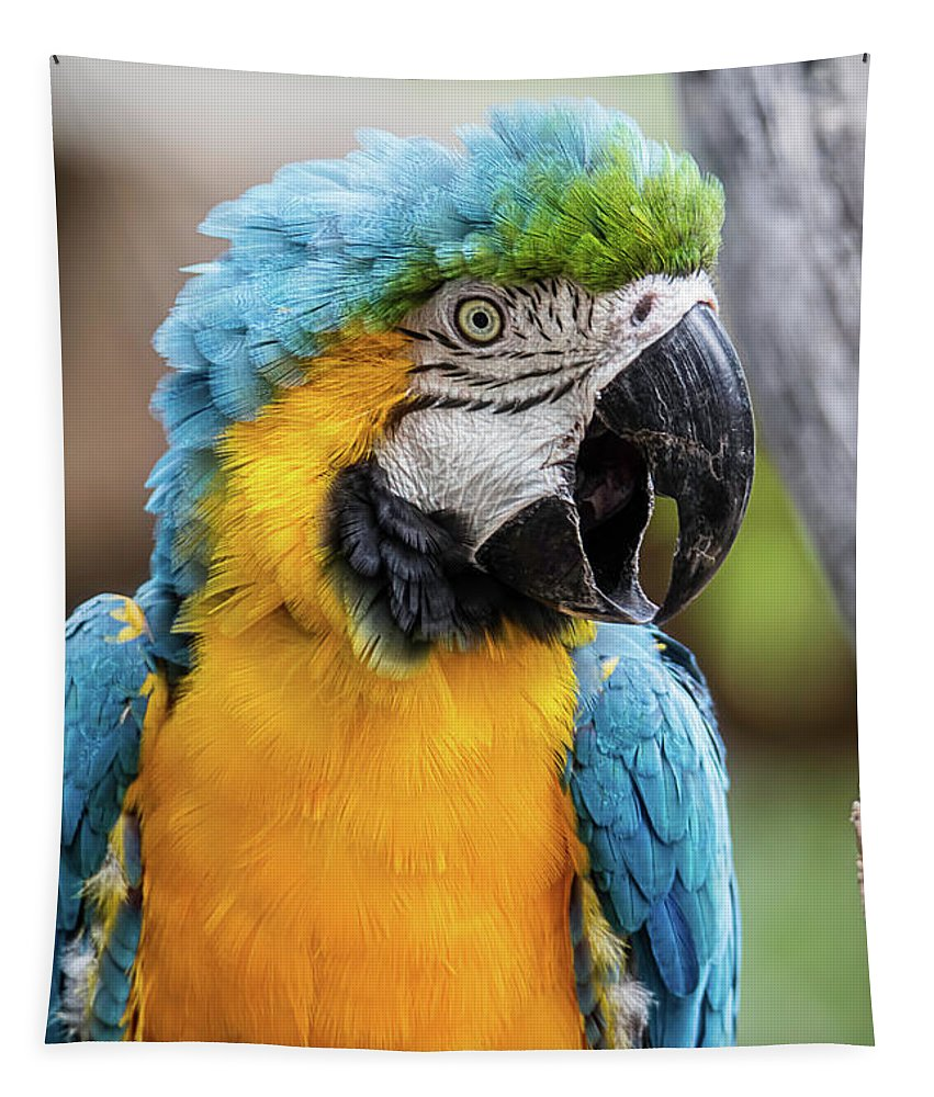Animal Tapestry featuring the photograph Blue And Yellow Macaw Vertical by Teresa Wilson