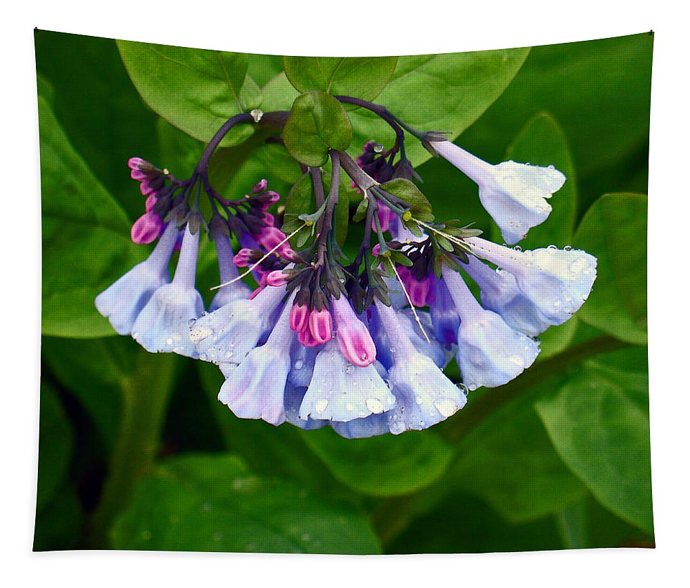 Native Landscape Tapestry featuring the photograph Blue Bells by Steve Karol
