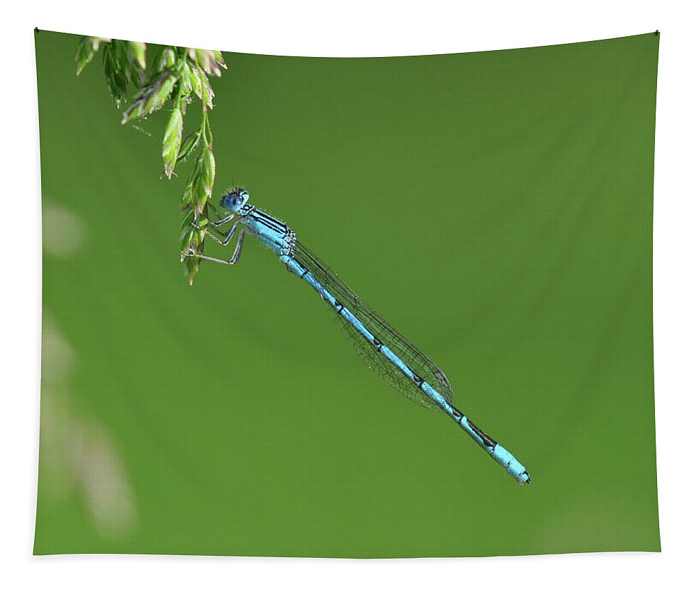Bug Tapestry featuring the photograph Blue Dragonfly by Barbara Treaster