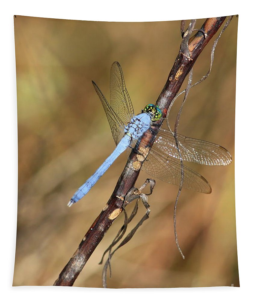 Dragonflies Tapestry featuring the photograph Blue Dragonfly Portrait by Carol Groenen