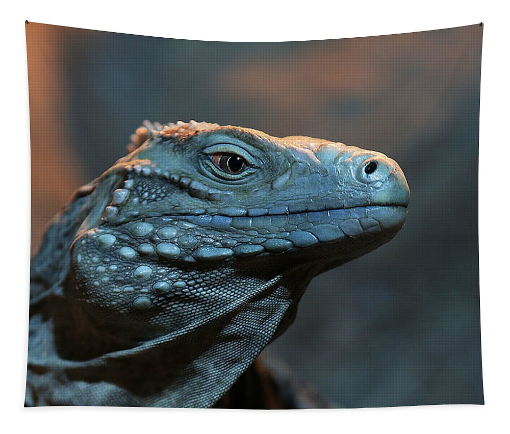 Animal Tapestry featuring the photograph Blue Iguana by Debi Dalio