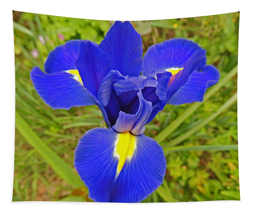 Photographic Print Tapestry featuring the photograph Blue Iris Beauty by Marian Bell