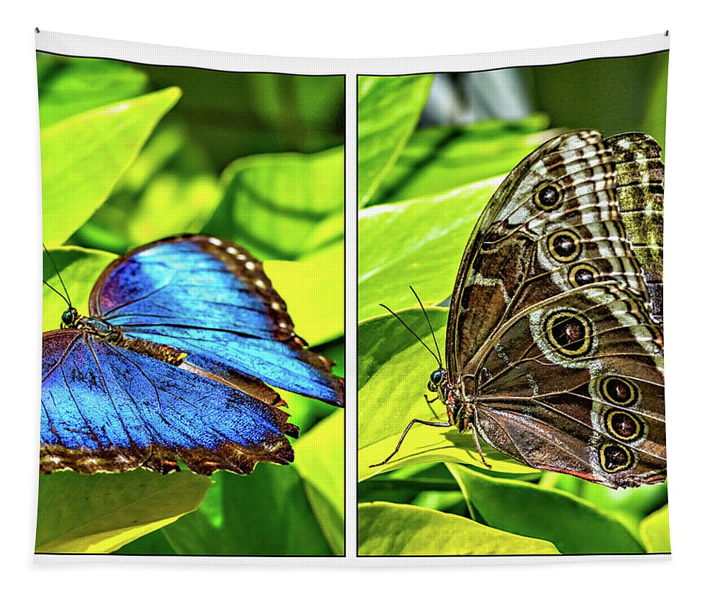 Steve Harrington Tapestry featuring the photograph Blue Morpho Butterfly Diptych by Steve Harrington