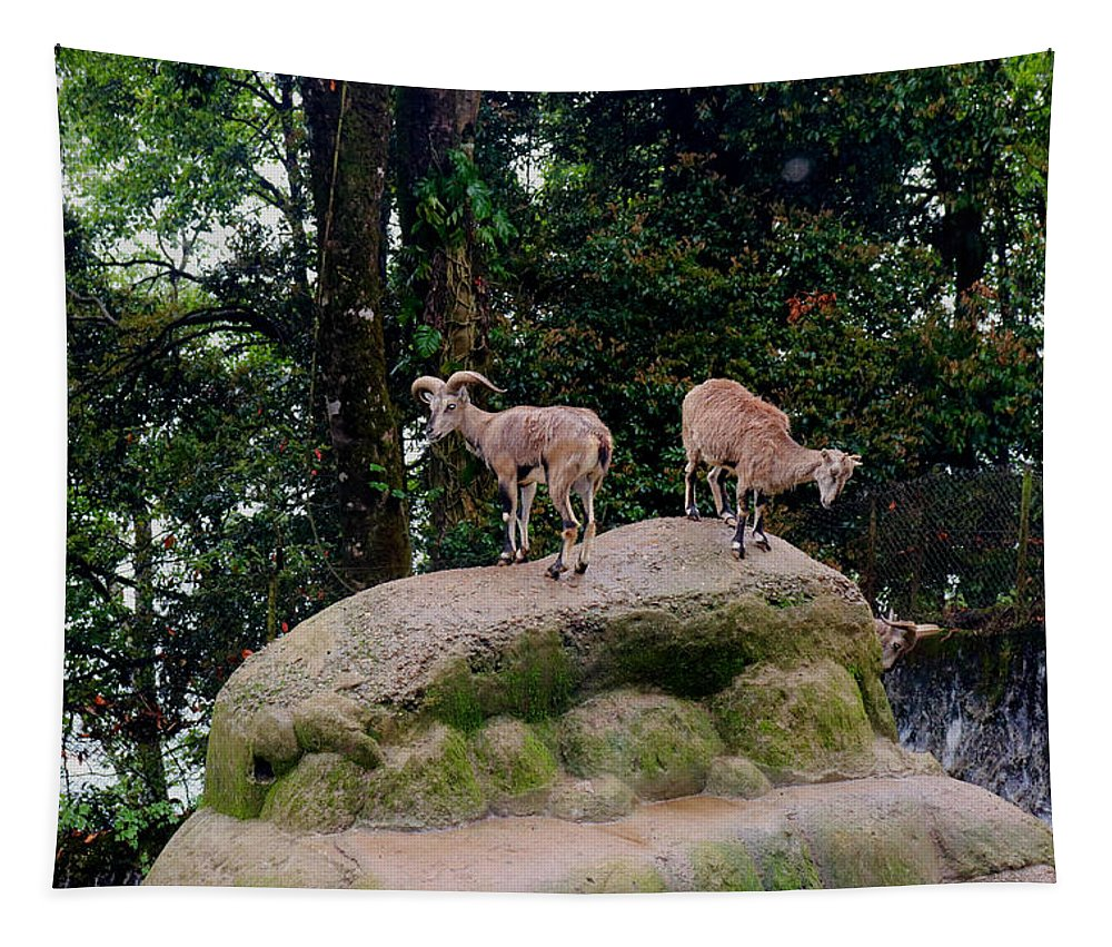 Blue Tapestry featuring the photograph Blue Sheep by Nilu Mishra