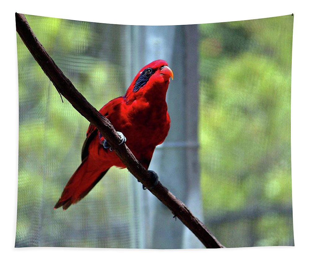 Blue-streaked Lory Tapestry featuring the photograph Blue-streaked Lory by Cynthia Guinn