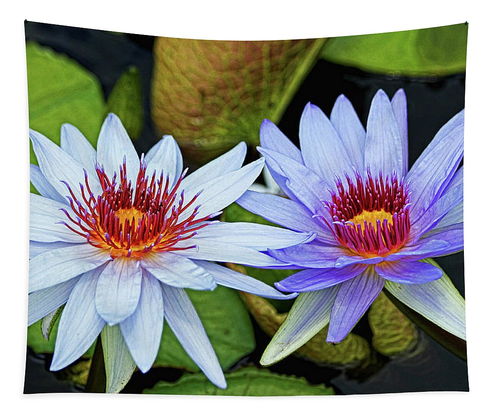 Aquatic Tapestry featuring the photograph Blue Water Lilies by Judy Vincent