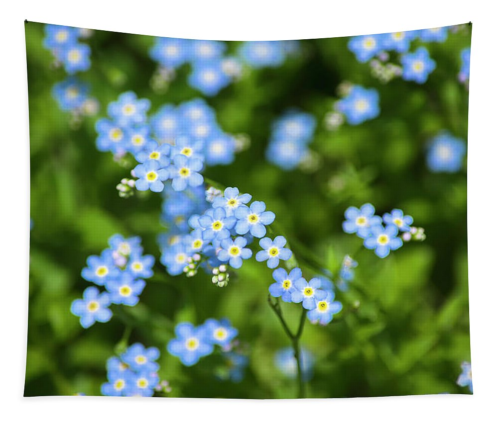 Blue Wildflowers Tapestry featuring the photograph Blue Wildflowers Forget Me Nots by Christina Rollo