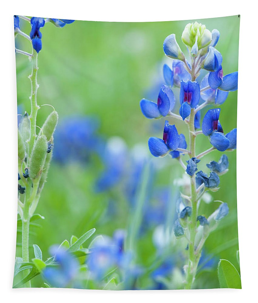 Flower Tapestry featuring the photograph Bluebonnets by Stephen Anderson