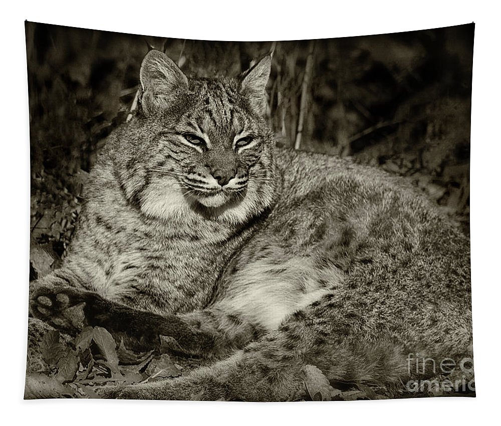 Bobcat Tapestry featuring the photograph Bobcat In Black And White by Karen Adams