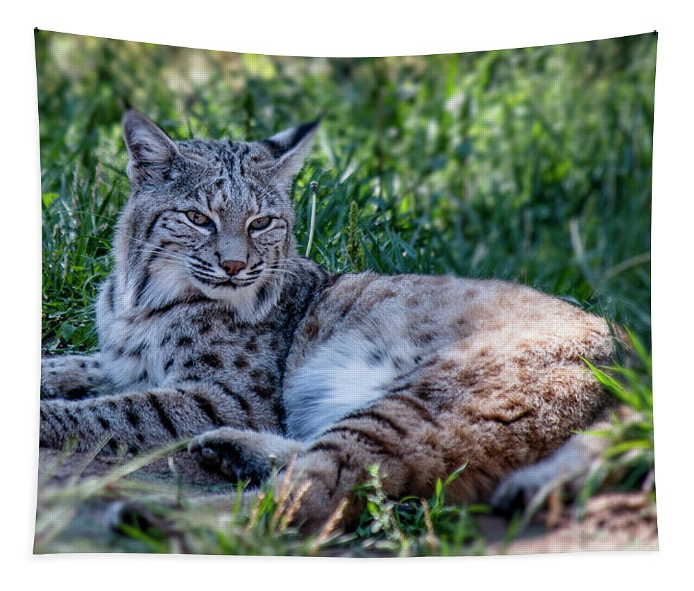 Arizona Tapestry featuring the photograph Bobcat In The Grass 2 by Teresa Wilson