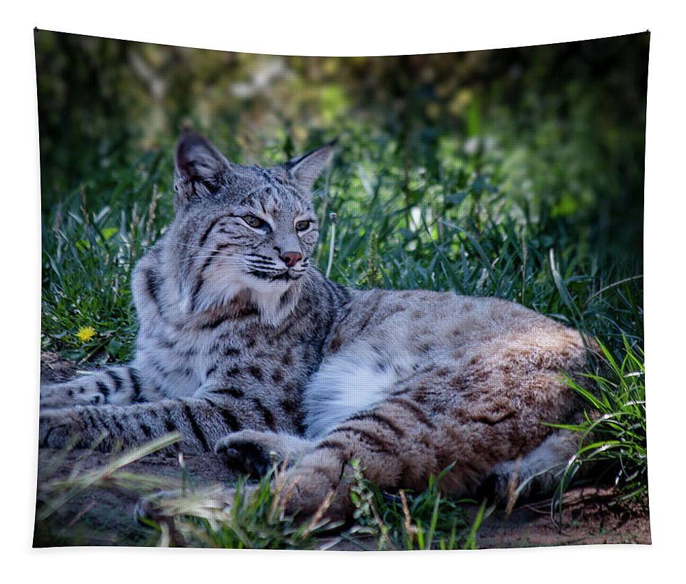 Arizona Tapestry featuring the photograph Bobcat In The Grass by Teresa Wilson