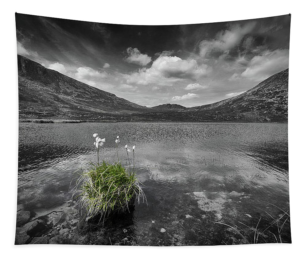 Bog Tapestry featuring the photograph Bog Cotton On Blue Lough by Nigel R Bell