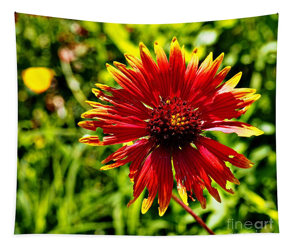 Boldly Tapestry featuring the photograph Boldly I Am by Gary Richards