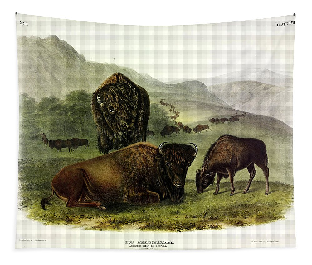 Bos Americanus Tapestry featuring the pastel Bos Americanus, American Bison by John James Audubon