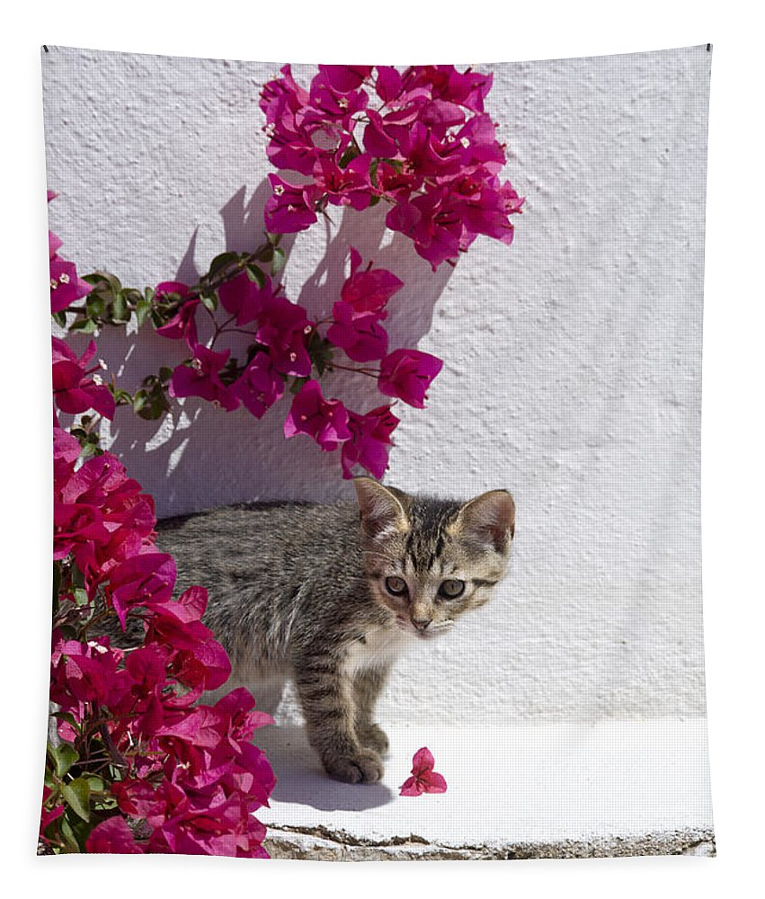Kitten Tapestry featuring the photograph Bougainvillaea Tabby by Mikehoward Photography