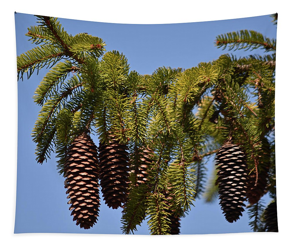 Pine Tree Tapestry featuring the photograph Boughs Of Pine Cones by Maria Keady