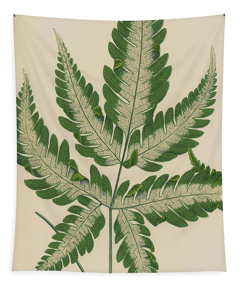 Fern Tapestry featuring the painting Brake Fern by English School