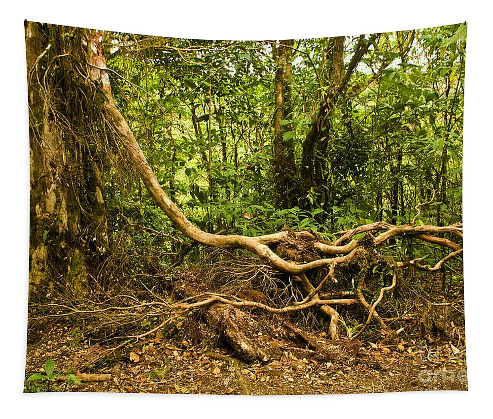 Tree Tapestry featuring the photograph Branching Out In Costa Rica by Madeline Ellis