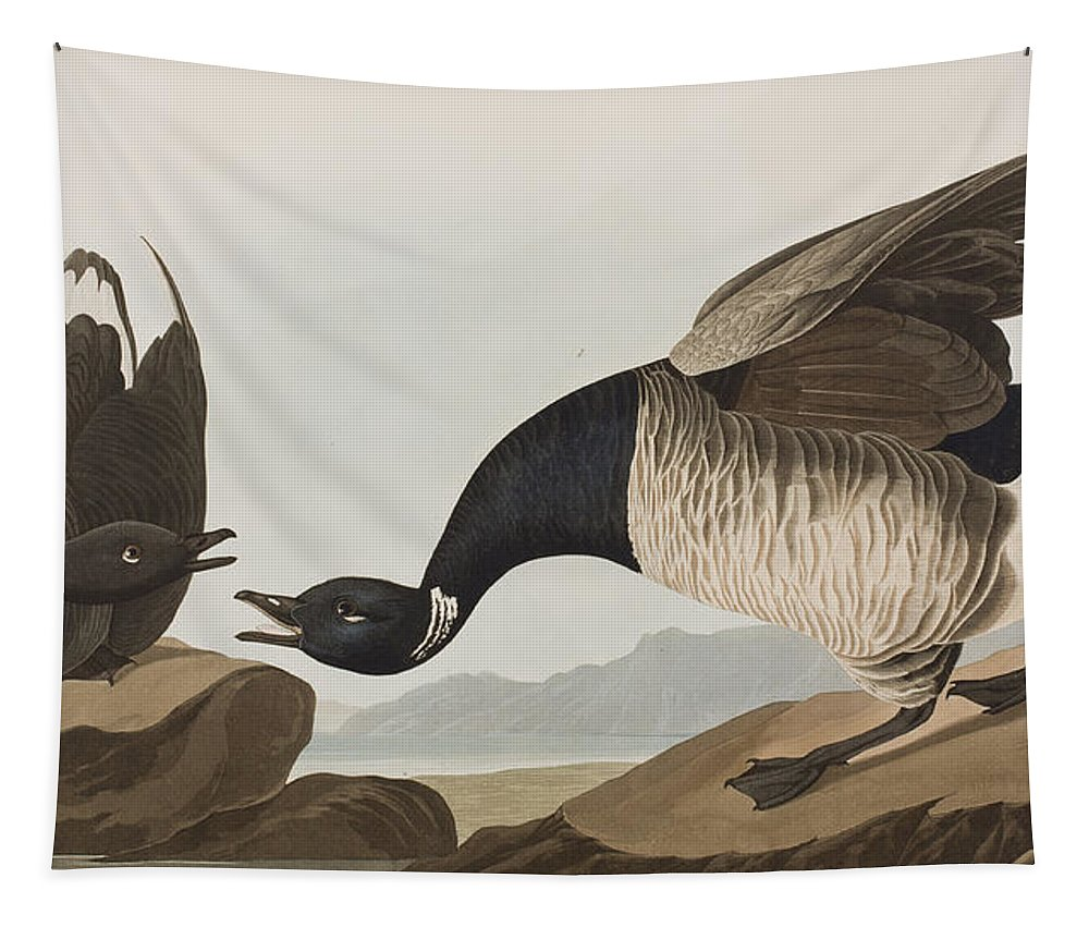 Brant Tapestry featuring the painting Brant Goose by John James Audubon