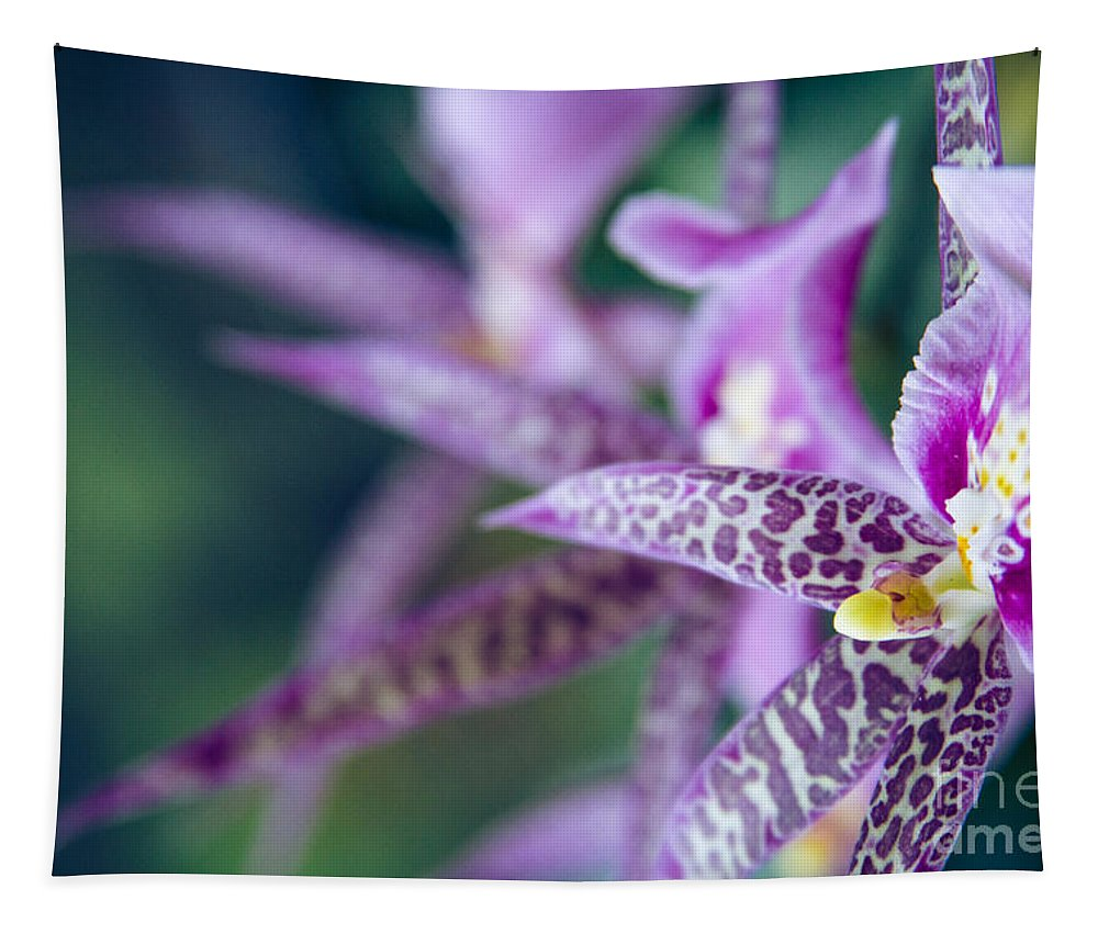 Orchid Tapestry featuring the photograph Bratonia Miltassia Charles M Fitch Izumi Orchids by Sharon Mau