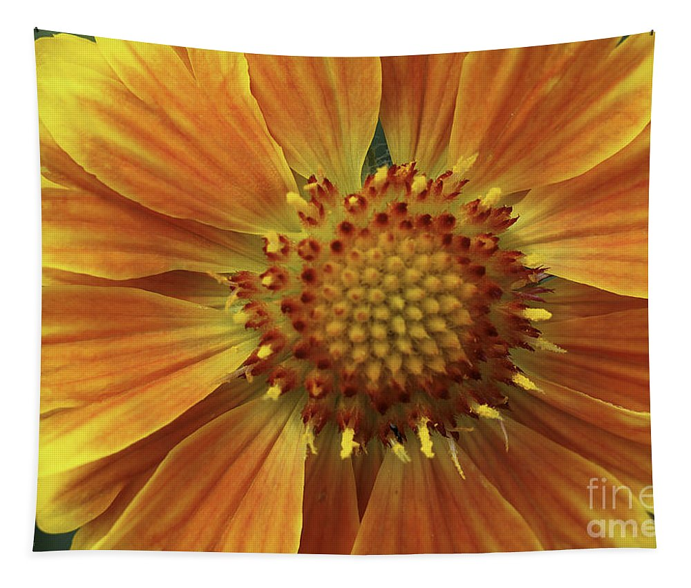 Flower Tapestry featuring the photograph Bright And Sasy by Deborah Benoit