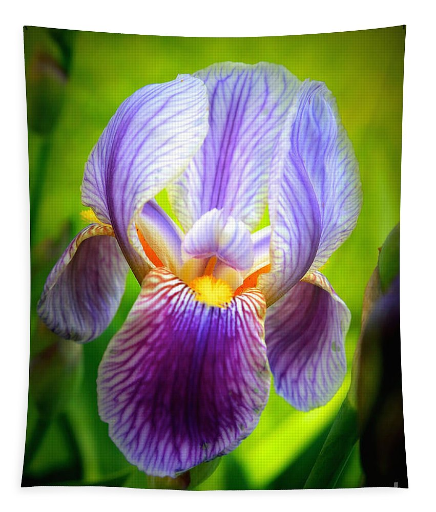 Iris Tapestry featuring the photograph Bright Iris by Carol Groenen