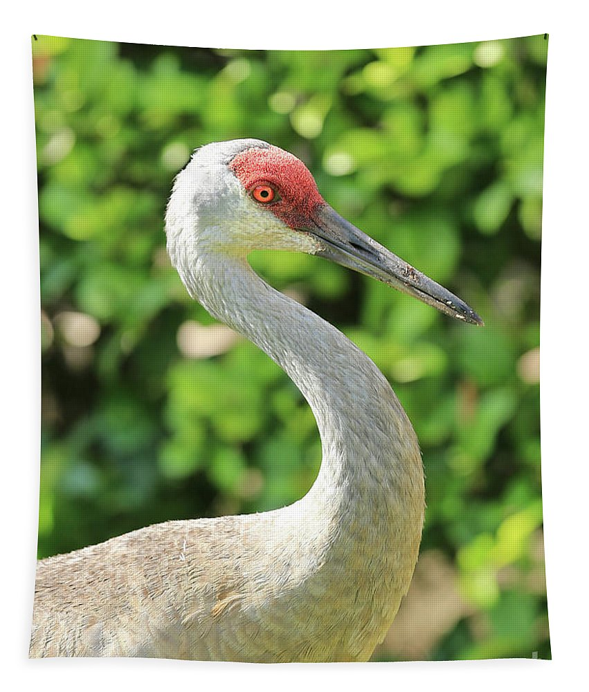 Sandhill Crane Tapestry featuring the photograph Bright Sandhill Crane Profile by Carol Groenen