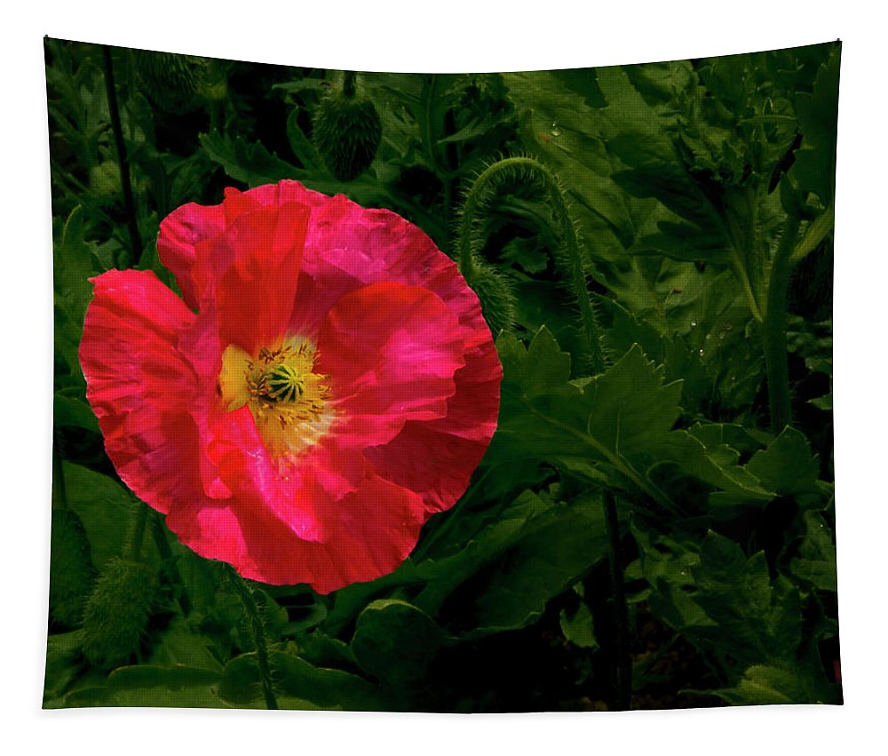 Jean Noren Tapestry featuring the photograph Brilliant Icelandic Poppy by Jean Noren