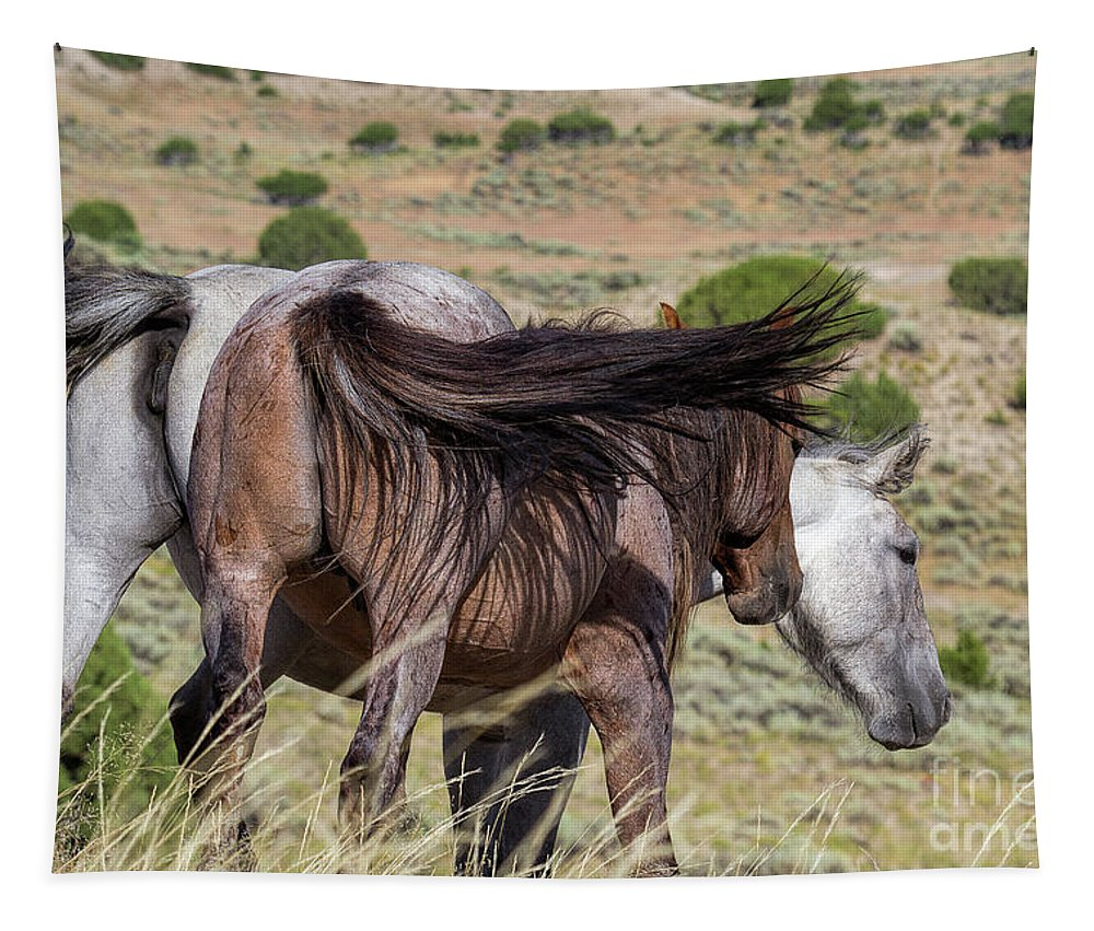 Horses Tapestry featuring the photograph Broomtails by Jim Garrison