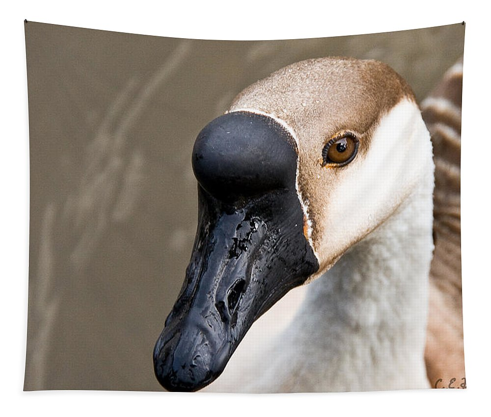 Chinese Brown Goose Tapestry featuring the photograph Brown Eye by Christopher Holmes