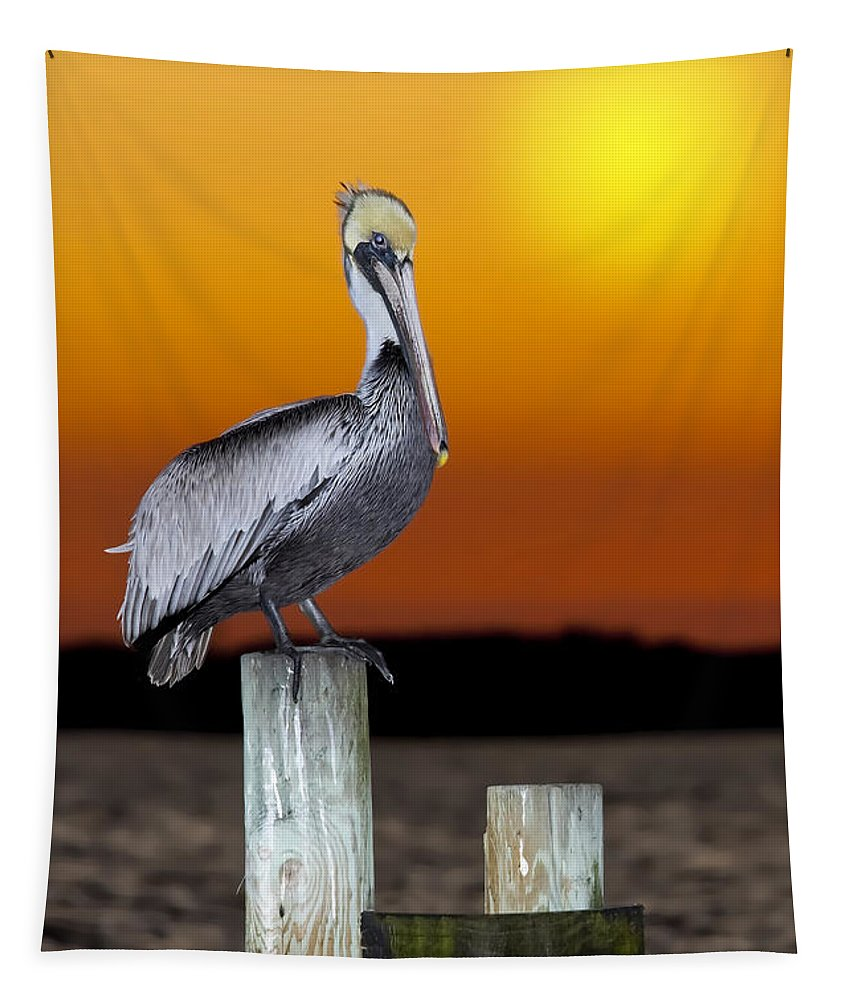 Brown Pelican Tapestry featuring the photograph Brown Pelican by Janet Fikar