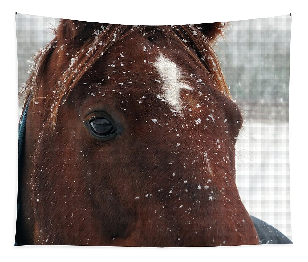 Horse Tapestry featuring the photograph Brown Snow Horse by Philip Openshaw
