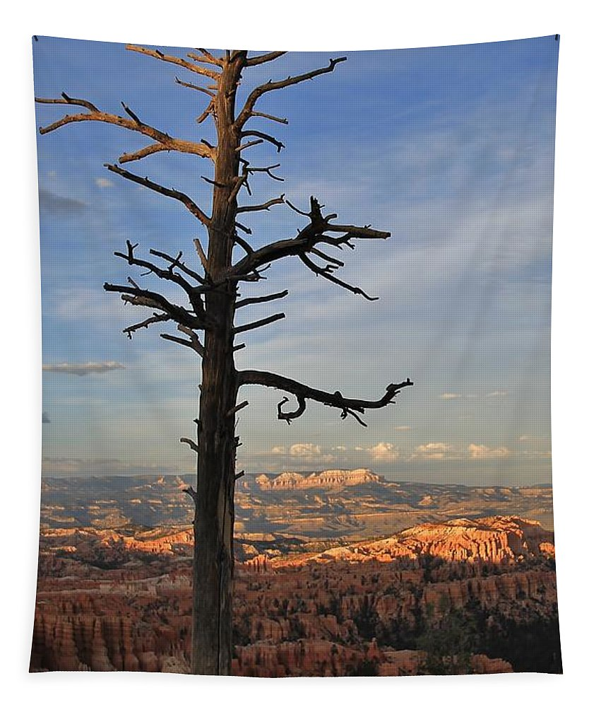 Bryce Canyon Tapestry featuring the photograph Bryce Canyon Dead Tree Sunset 3 by Mo Barton
