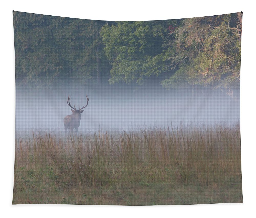 Elk Tapestry featuring the photograph Bull Elk Disappearing In Fog - September 30 2016 by D K Wall