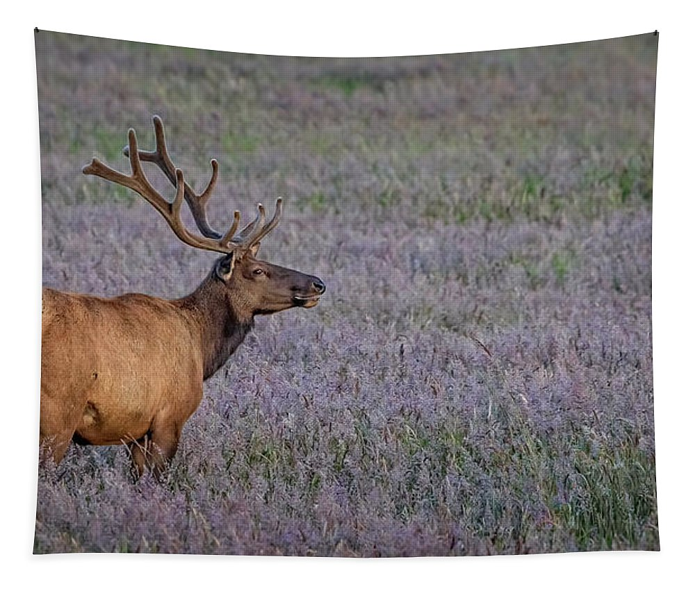 Bull Elk In Velvet Tapestry featuring the photograph Bull Elk In Velvet by Wes and Dotty Weber