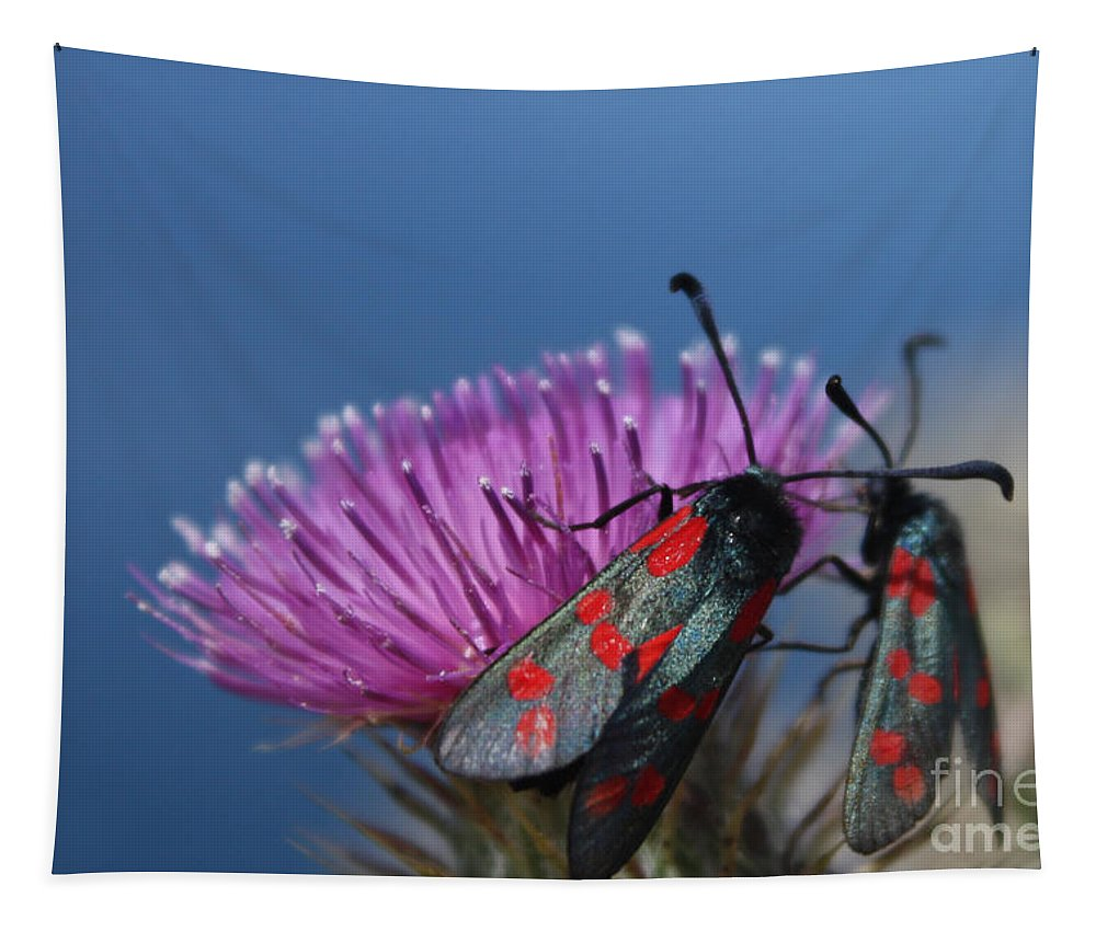 Moth Tapestry featuring the photograph Burnet Moths by Terri Waters