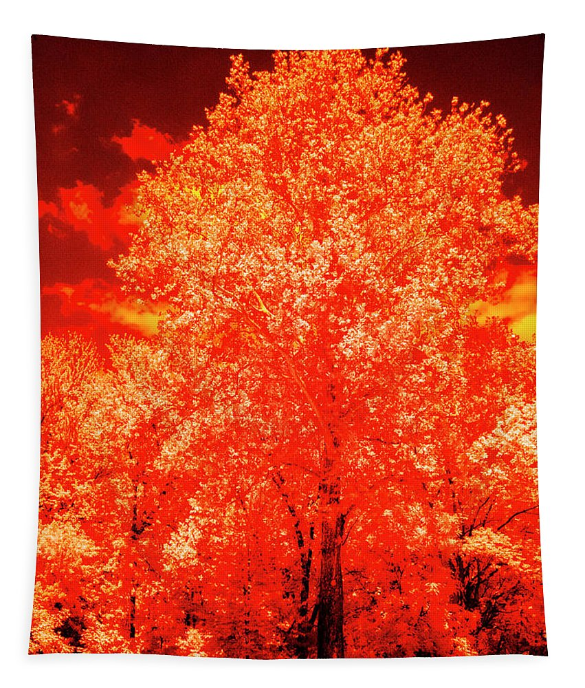Tree Tapestry featuring the photograph Burning Bush by Paul W Faust - Impressions of Light