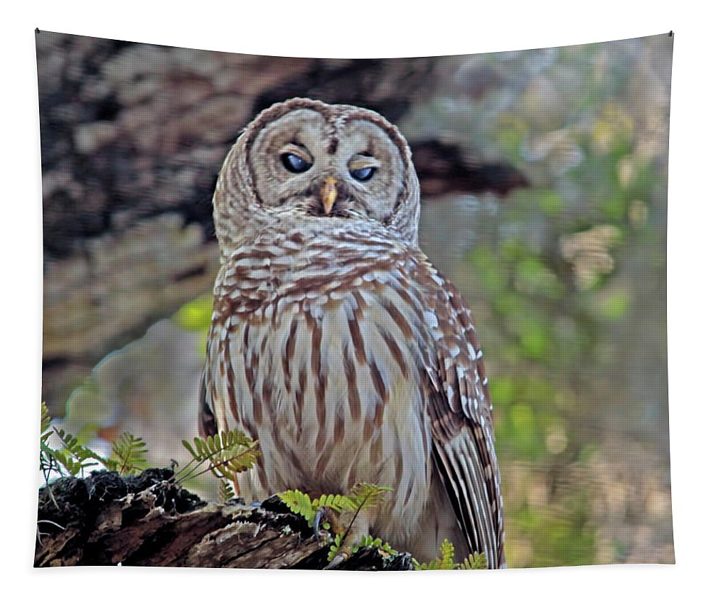 Owl Tapestry featuring the photograph Buschman Park Owl by Deborah Benoit