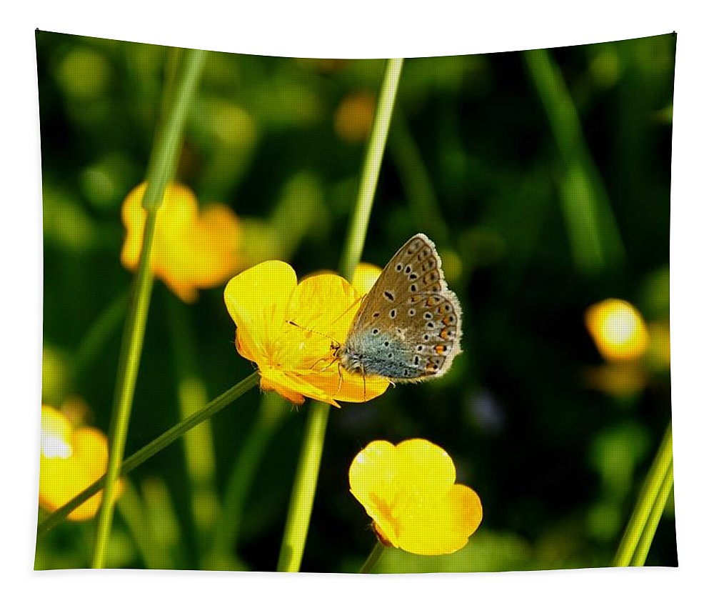 Butterfly Tapestry featuring the photograph Buttercup Butterfly by Noah Cole