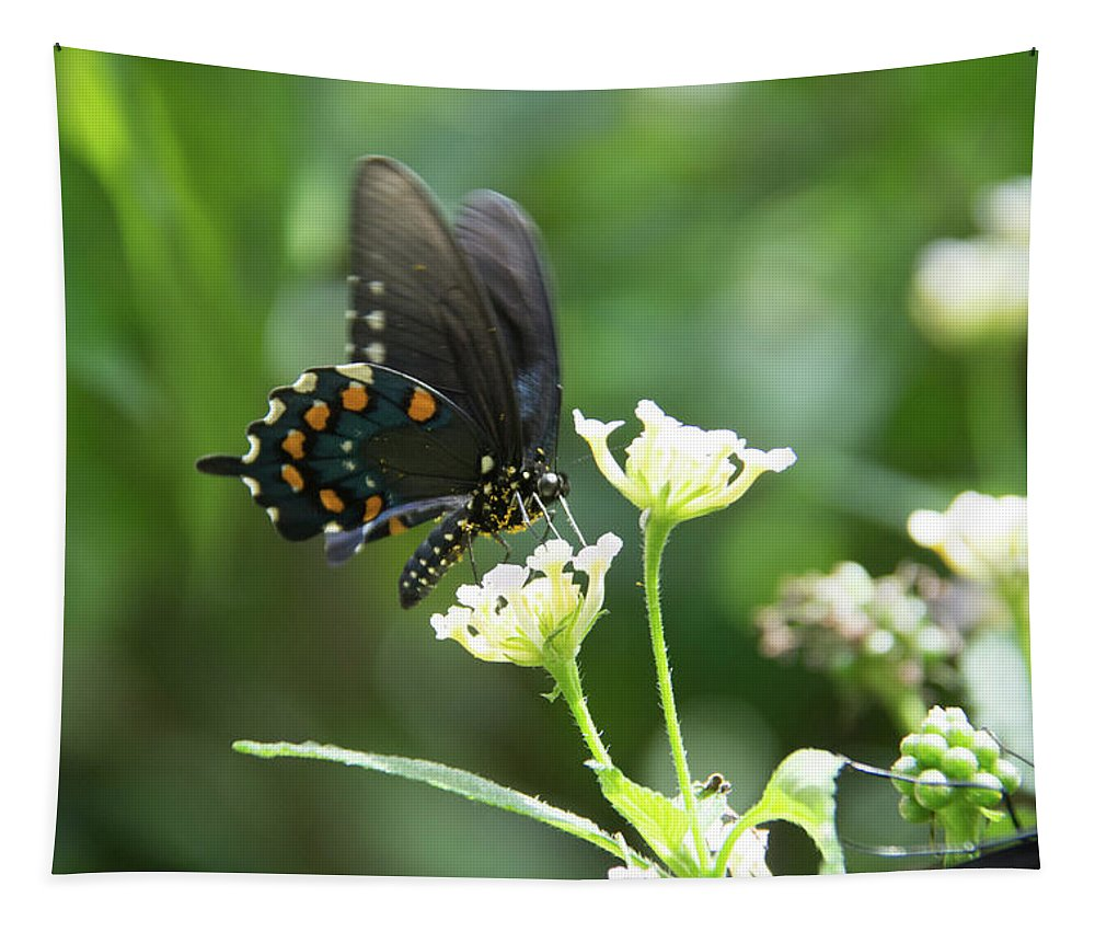 Butterfly Tapestry featuring the photograph Butterfly 140 by Pamela Williams