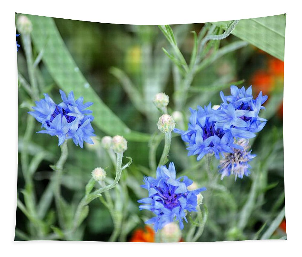 Bachelor Button Tapestry featuring the photograph Buttons by Bonfire Photography
