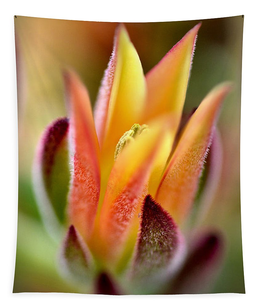 Echeveria Tapestry featuring the photograph Cacti Elegance by Deb Halloran