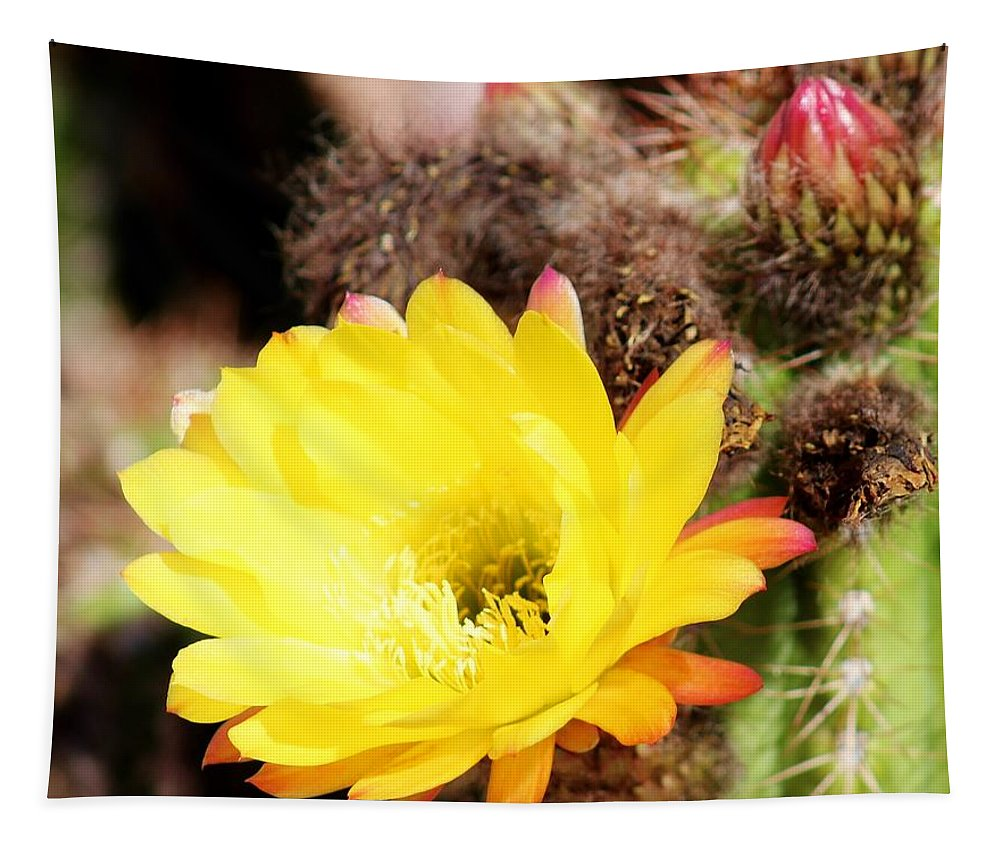 Flora Tapestry featuring the photograph Cactus Blooms Yellow 050214g by Edward Dobosh