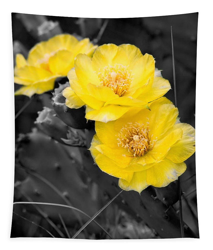 Cactus Tapestry featuring the photograph Cactus Blossom by Christopher Holmes