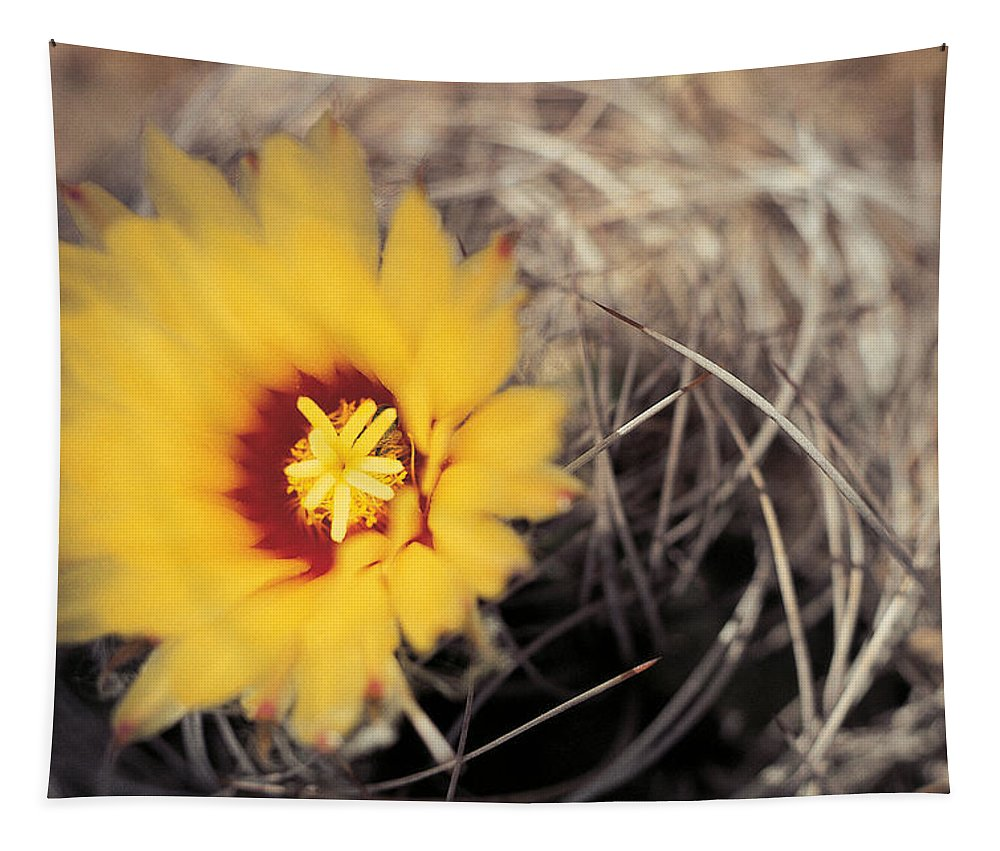 Cactus Tapestry featuring the photograph Cactus Flower by American School