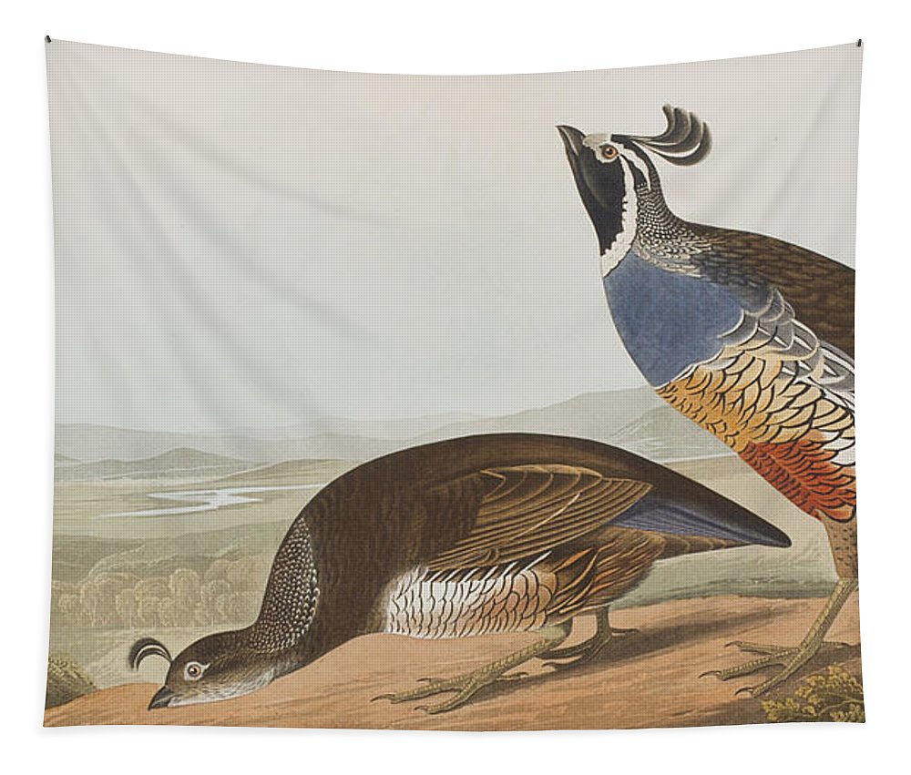 California Partridge Tapestry featuring the painting California Partridge by John James Audubon